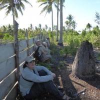 Listening for tarsiers
