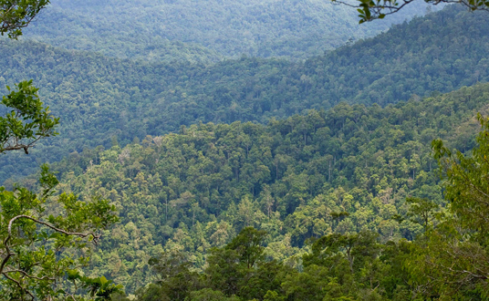 Tompotika Forest Preserve