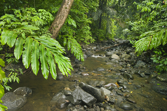Stream and rainforest, Mt. Tompotika forest reserve, Central Sulawesi, Indonesia