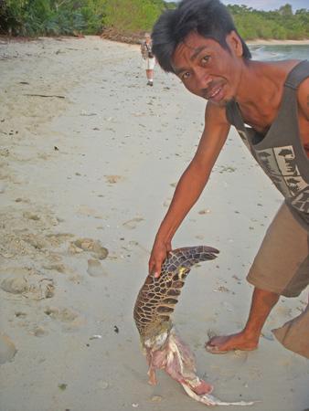 Sea turtle leg found on beach
