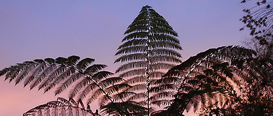 fern fronds against sunset sky