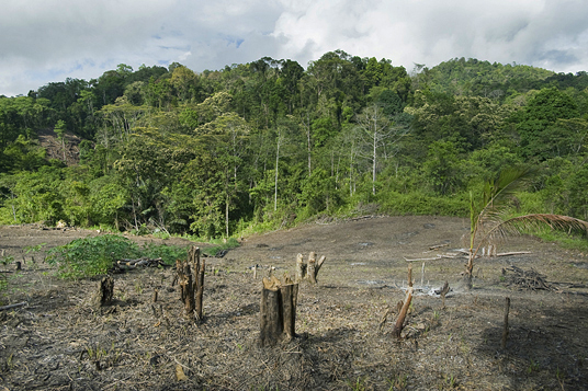 Villagers clear and burn patches of forest for planting crops.