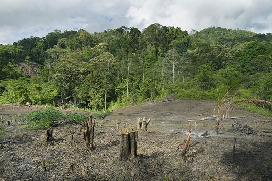 Orang desa menebang dan membakar sebagian hutan untuk ditanami hasil bumi. Praktek pertanian organik akan meningkatkan kesuburan tanah di lahan ini supaya penduduk tidak usah menebang hutan lagi.