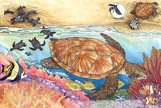 turtles poster by Sandra Noel