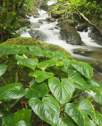 small clean stream in rainforest of Tompotika, Sulawesi, Indonesia
