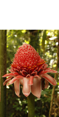 forest flower, coral red